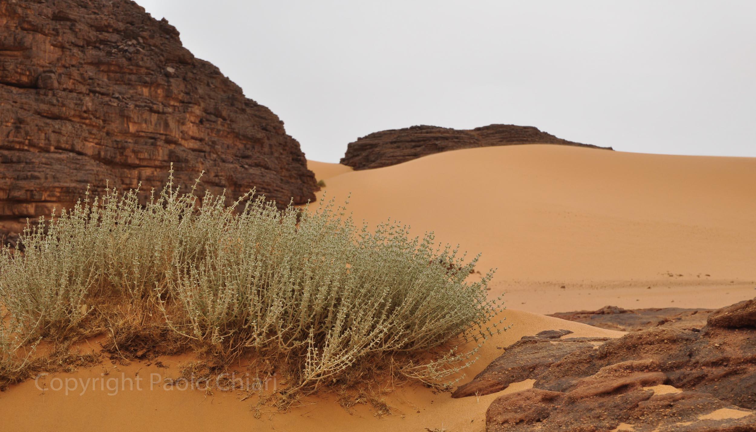 algeria12__1732