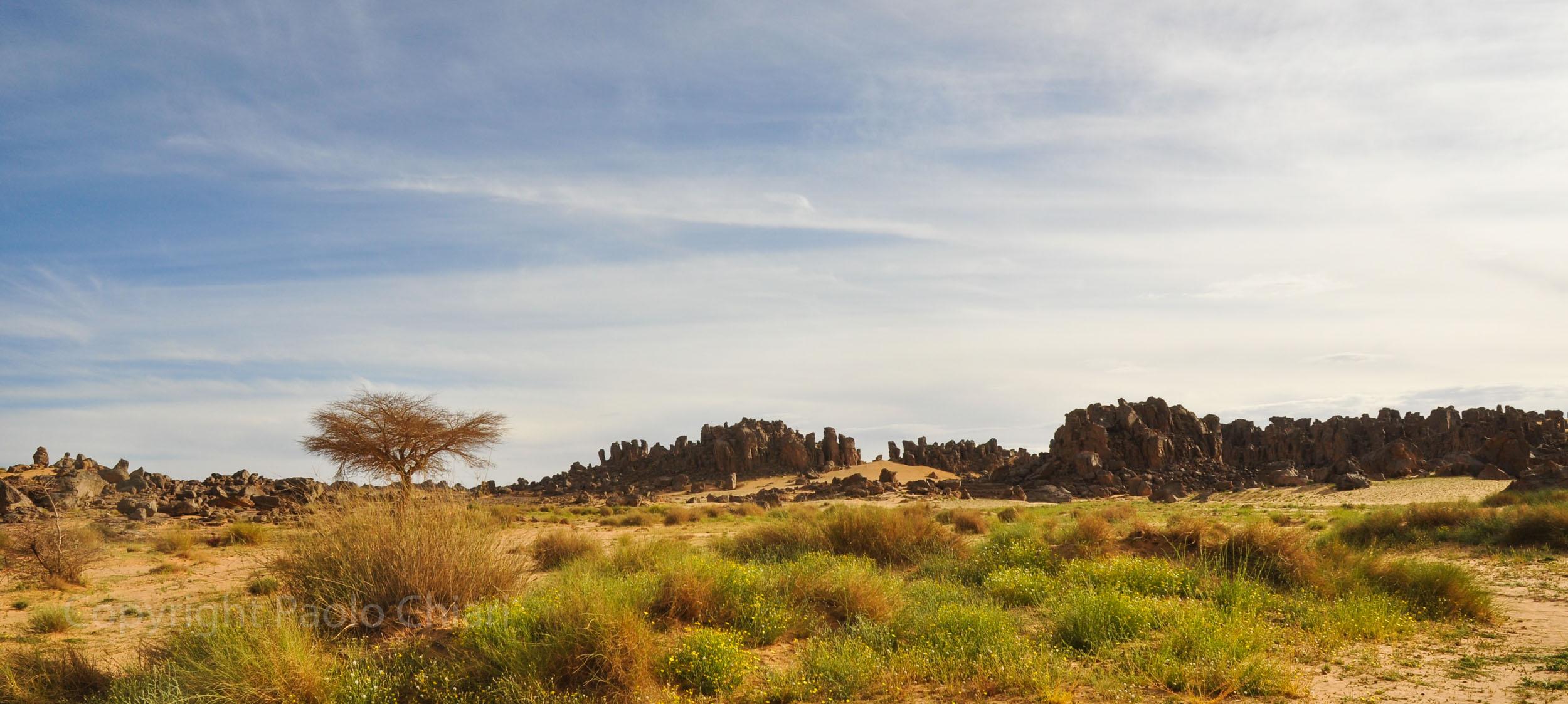 algeria12__787