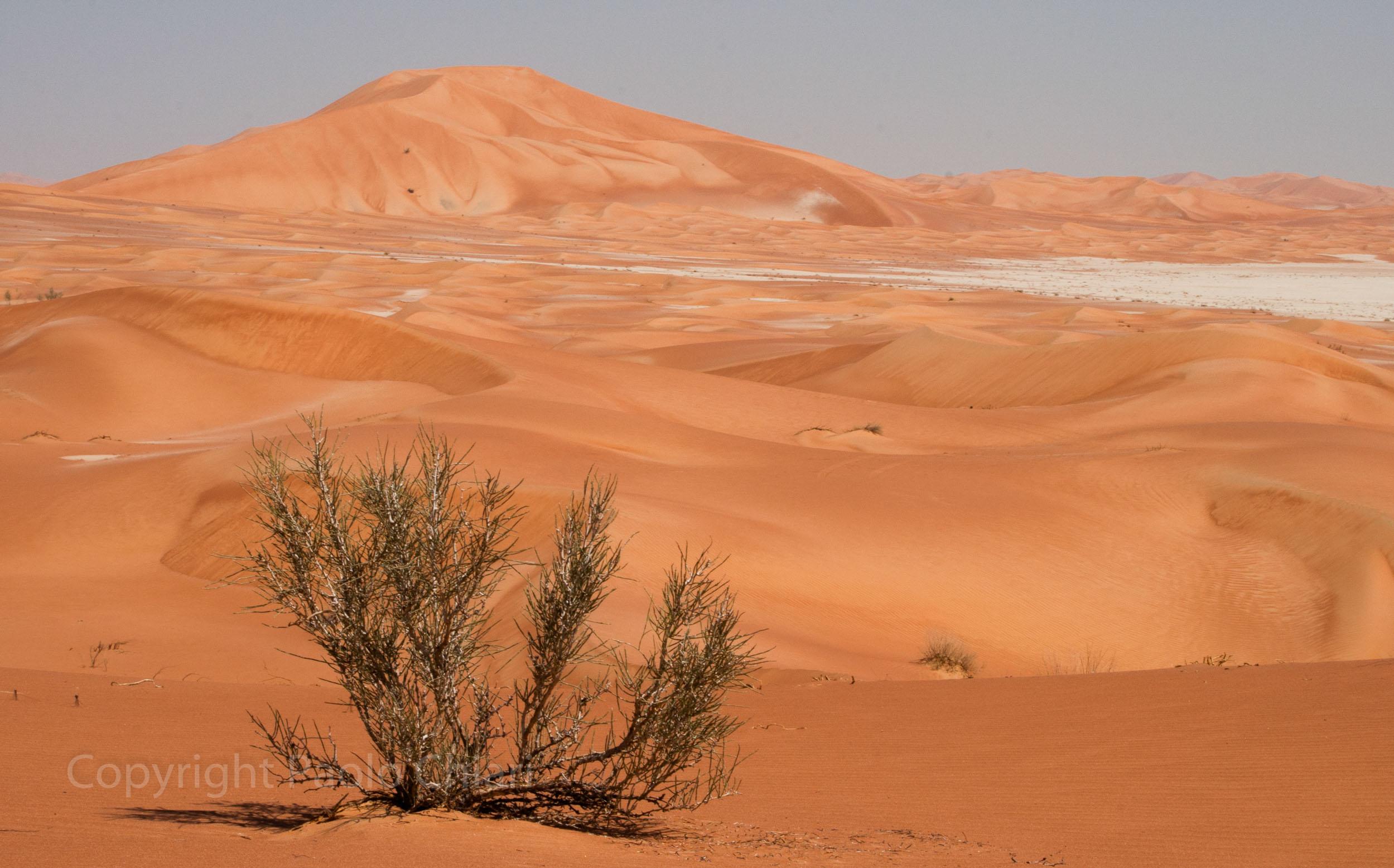 Oman14_1522