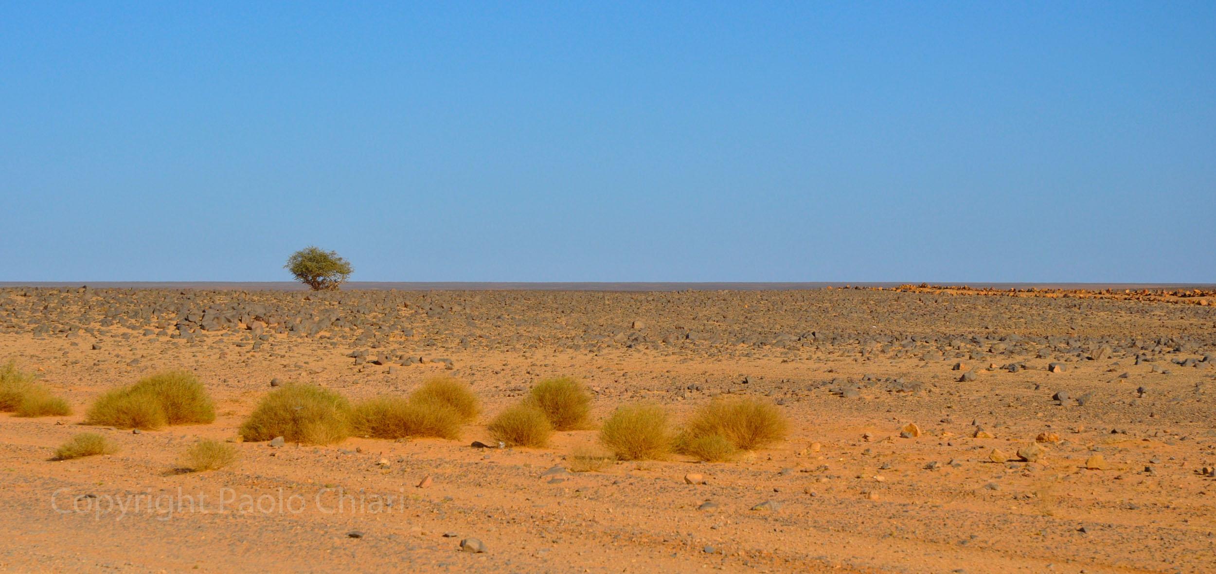 libia2010a_1849