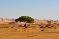 libia2010a_1443