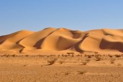 libia2010a_1489