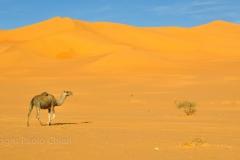 libia2010a_1639