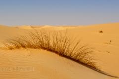 libia2010a_910