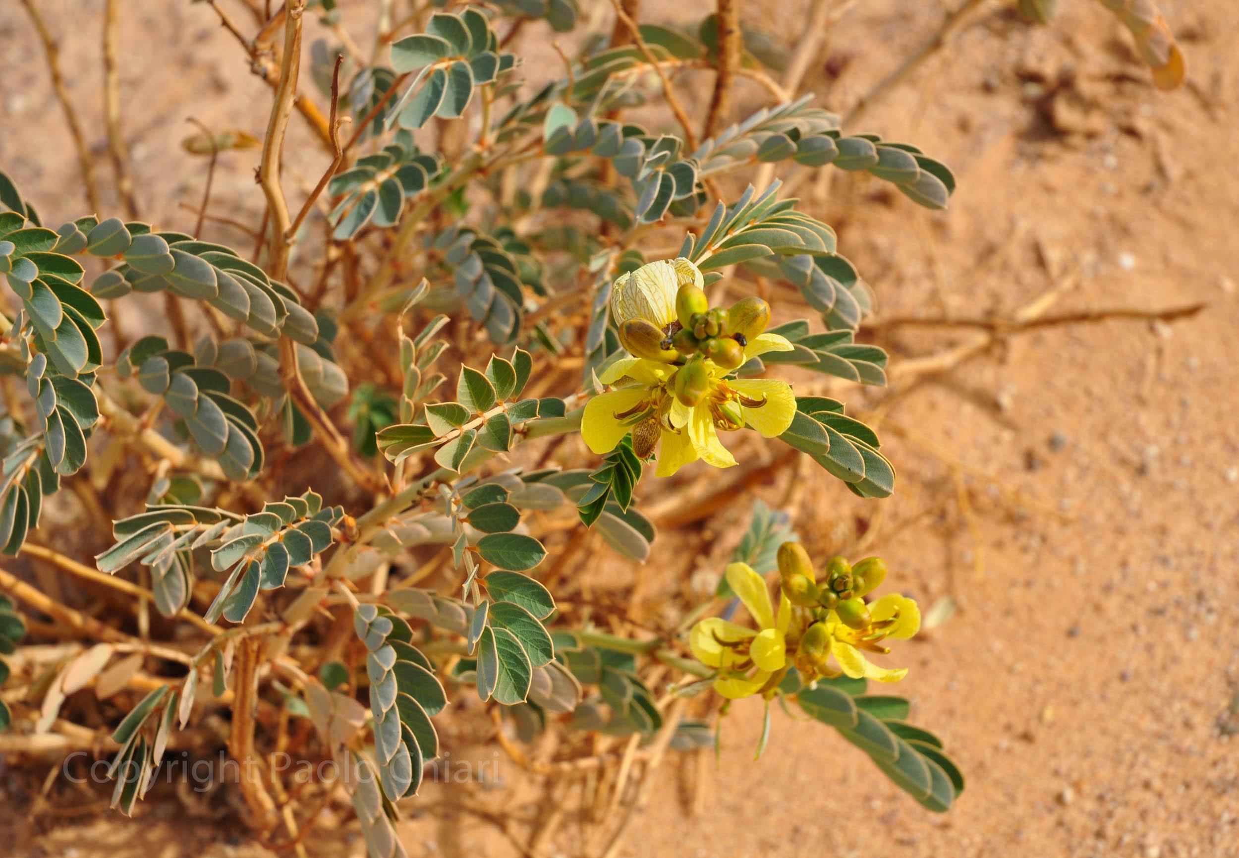 libia2010a_150
