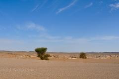 libia2010a_147