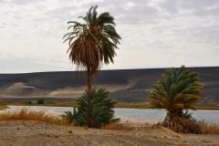 libia2010a_424