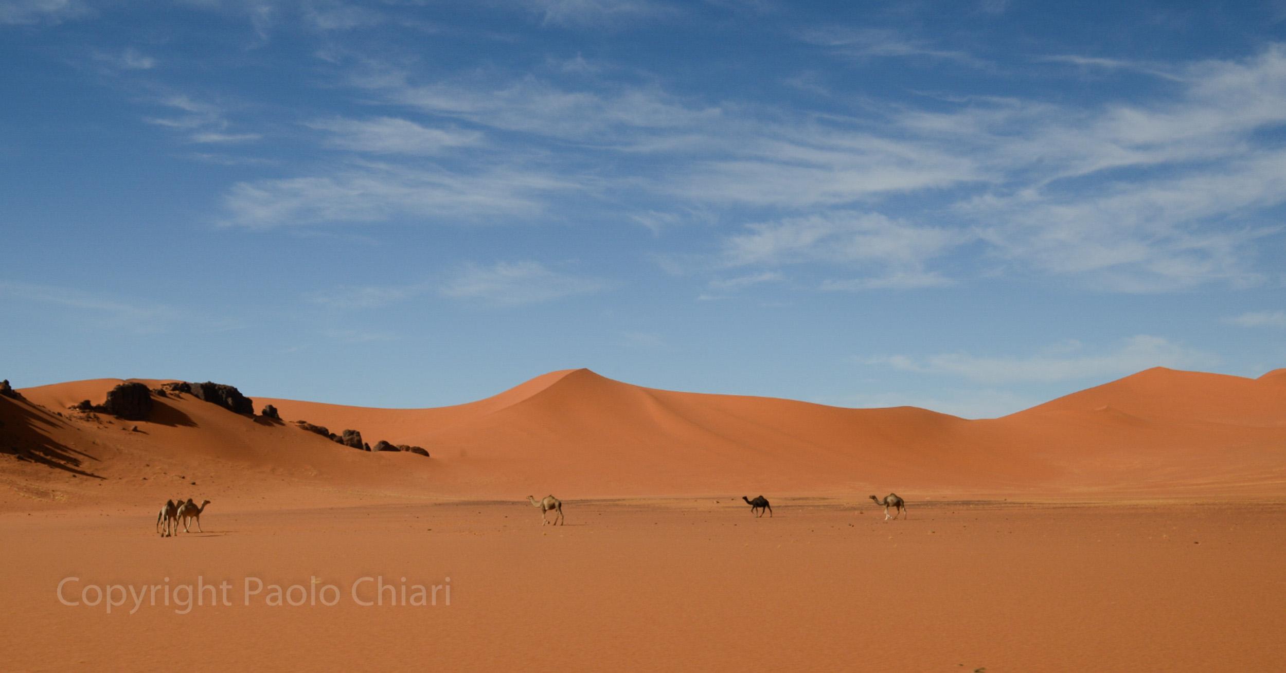algeria12a__1573