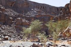 algeria12a__1384