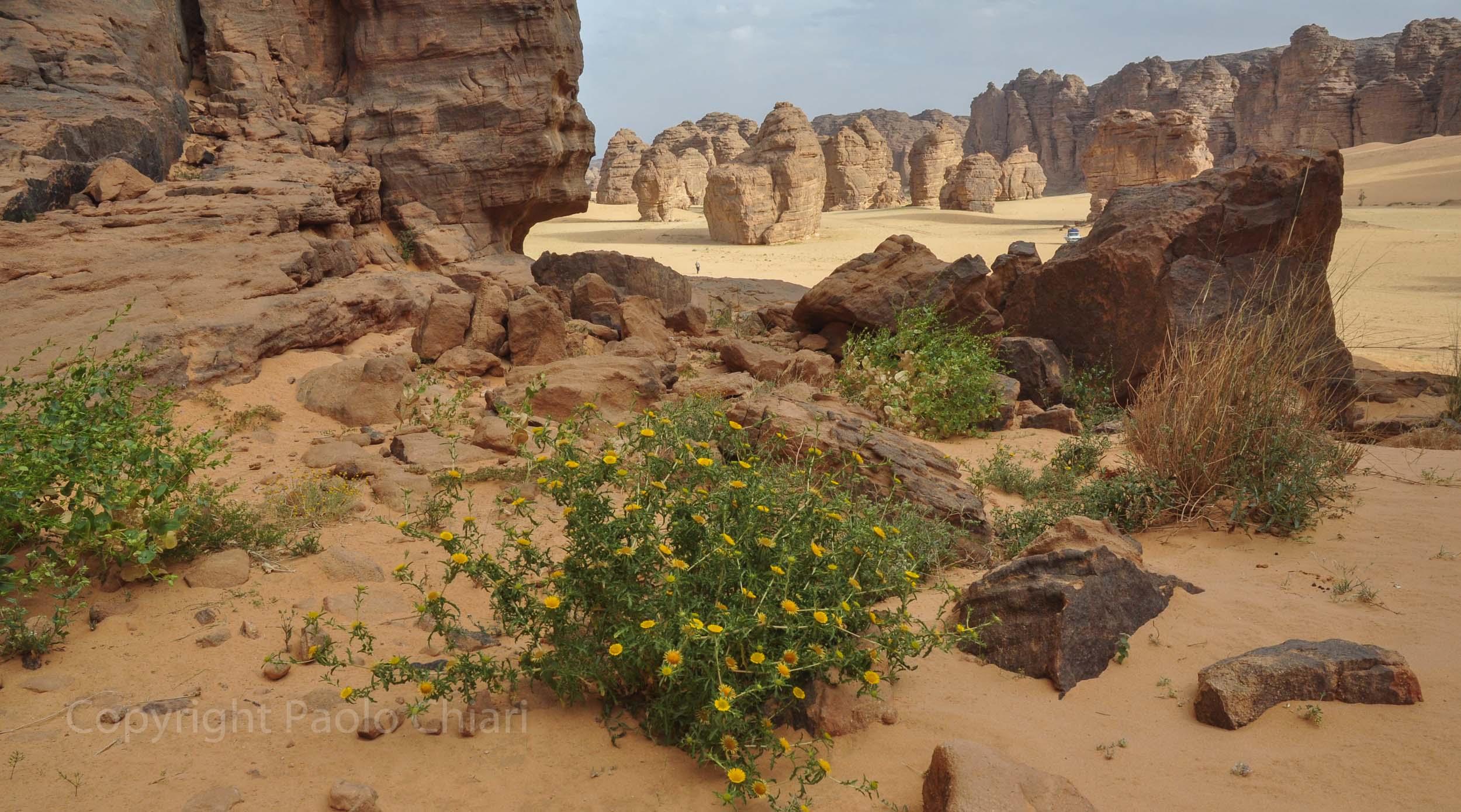 algeria12__1797