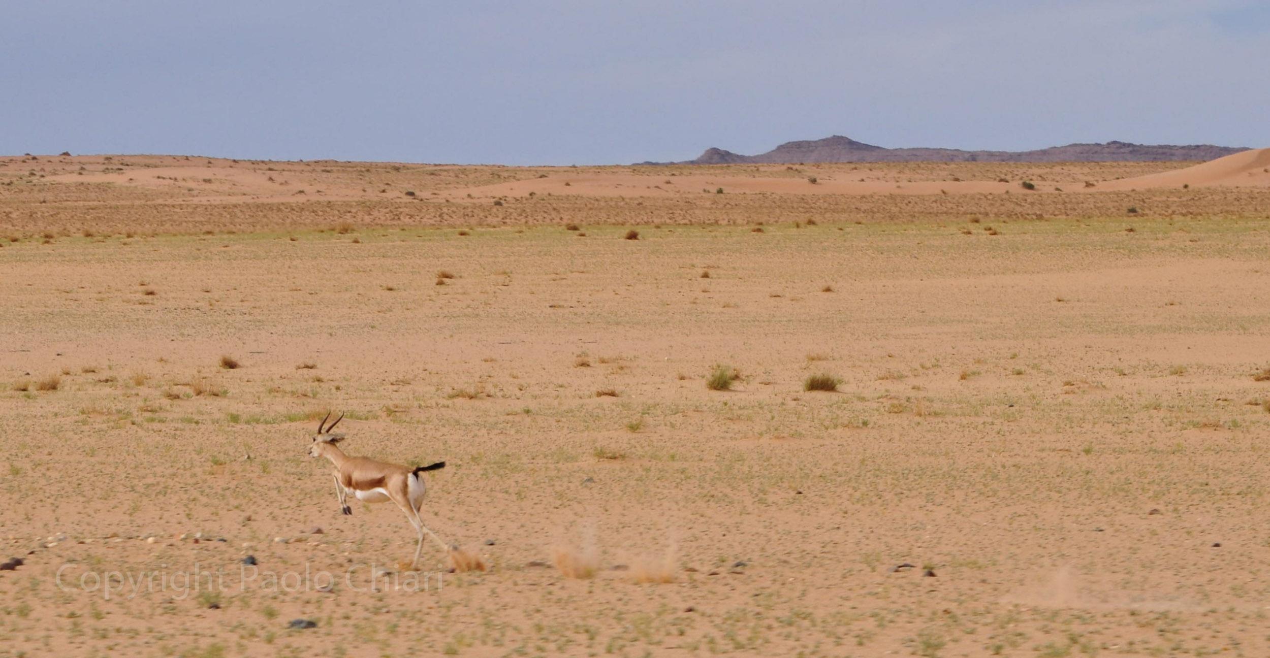algeria12__579