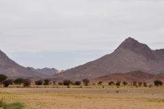 algeria12__481