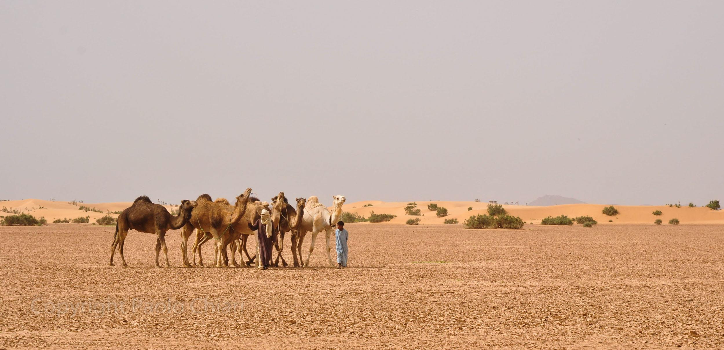 algeria12__1191