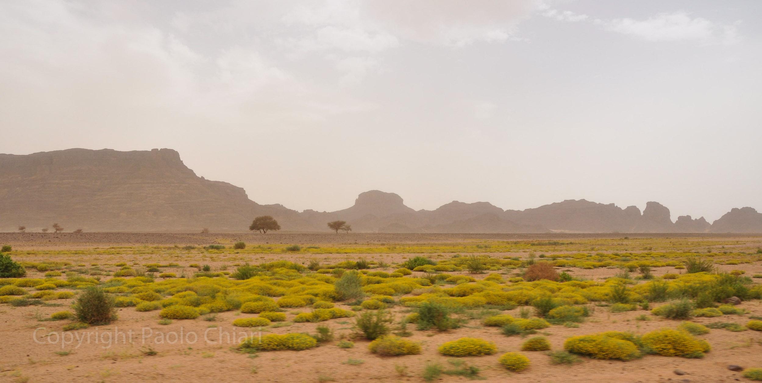 algeria12__187