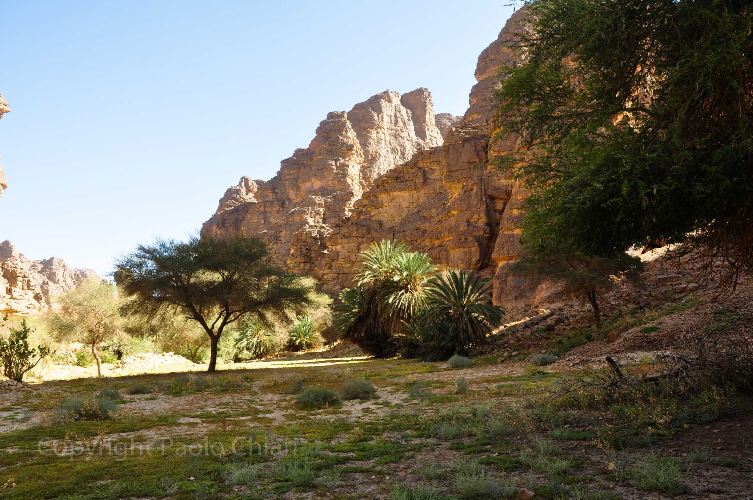 algeria12__333