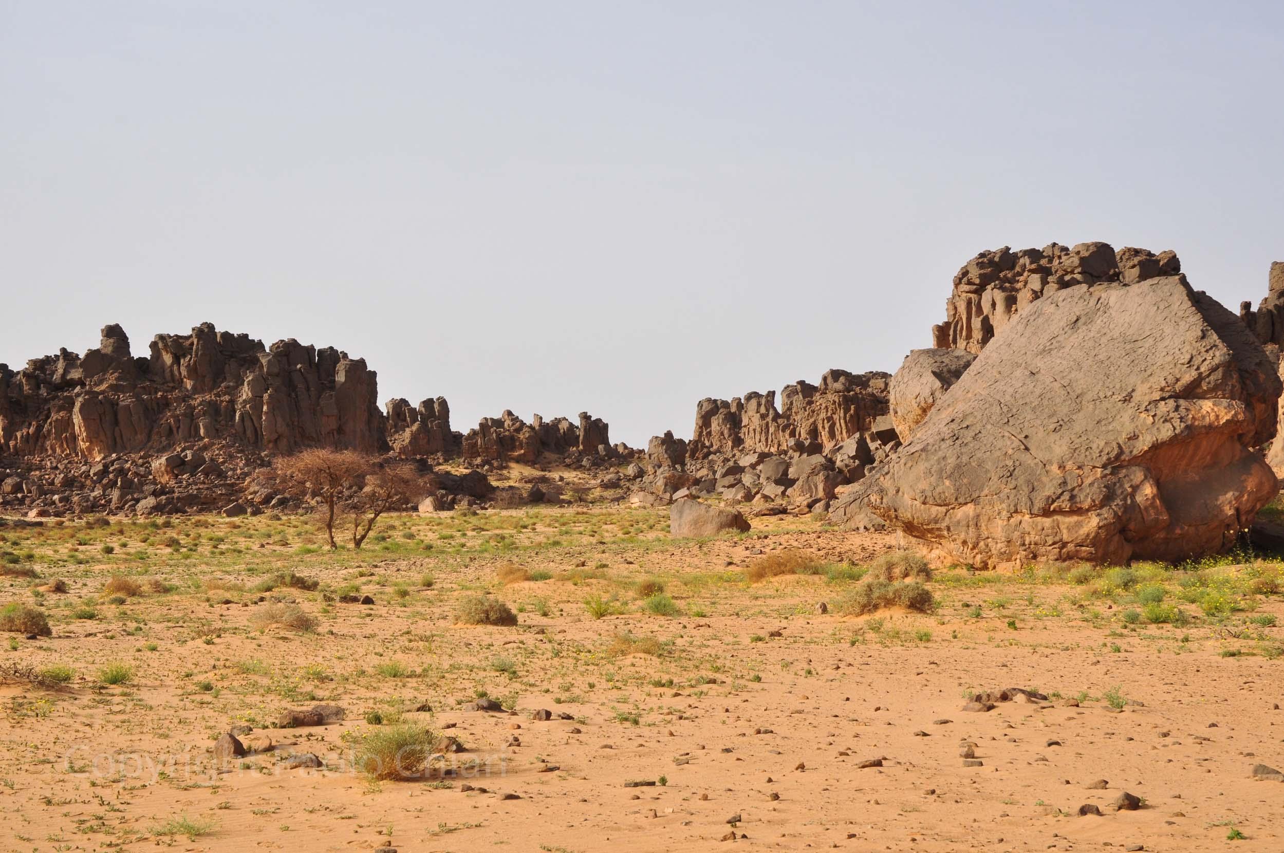 algeria12__869