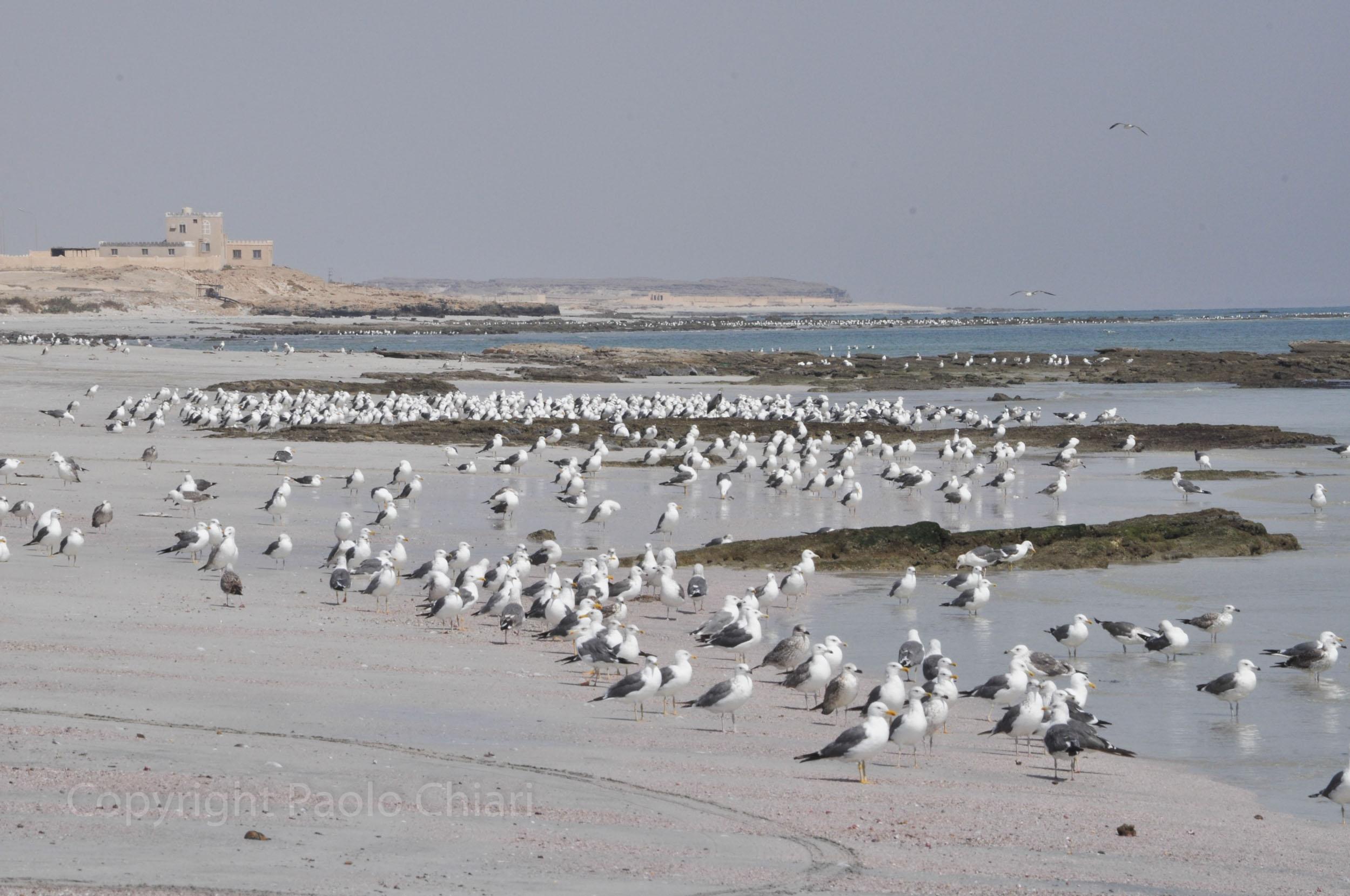 256_Oman13_1393