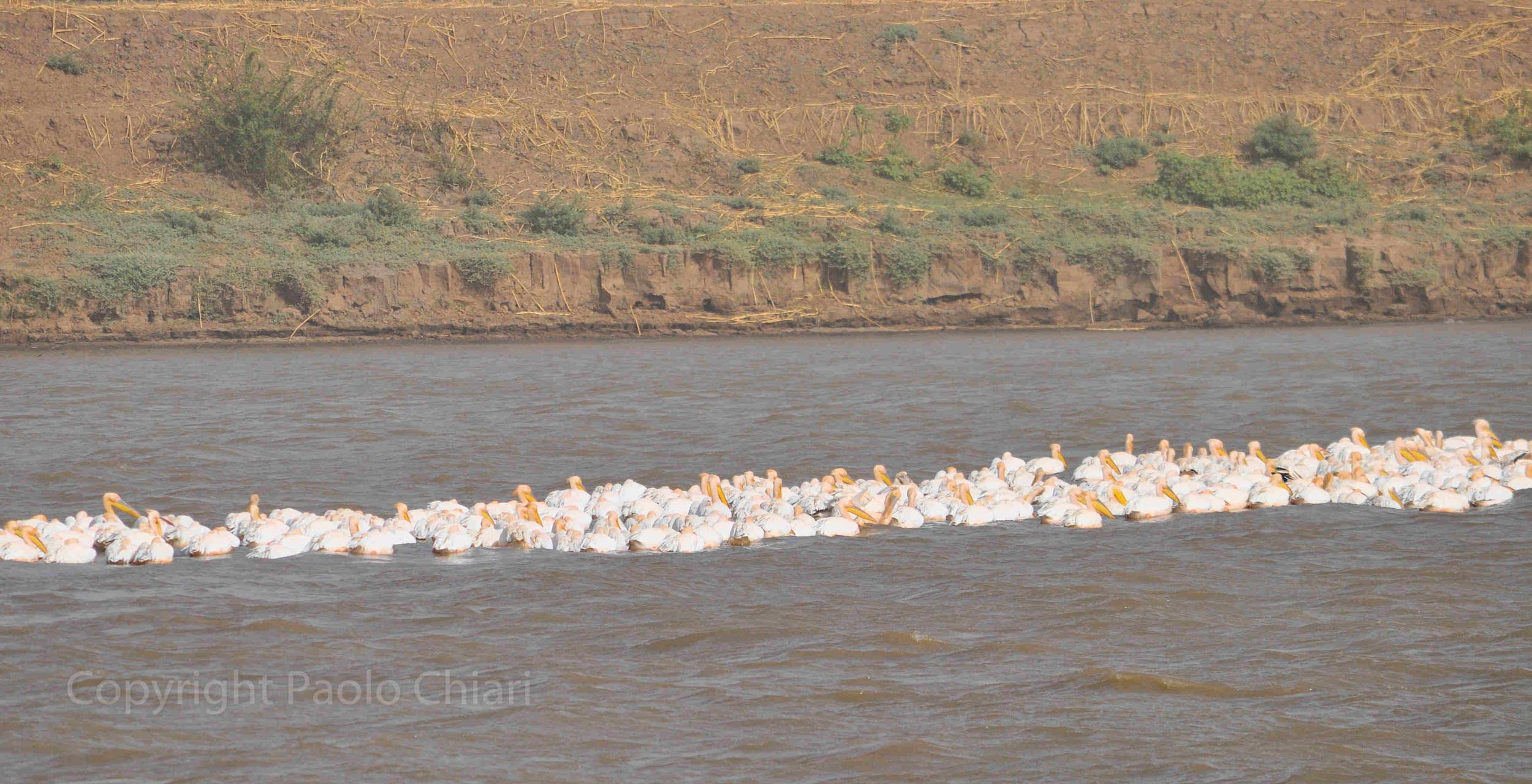Sudan2013_0246