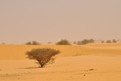 Sudan_0283