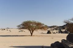 Sudan_0383
