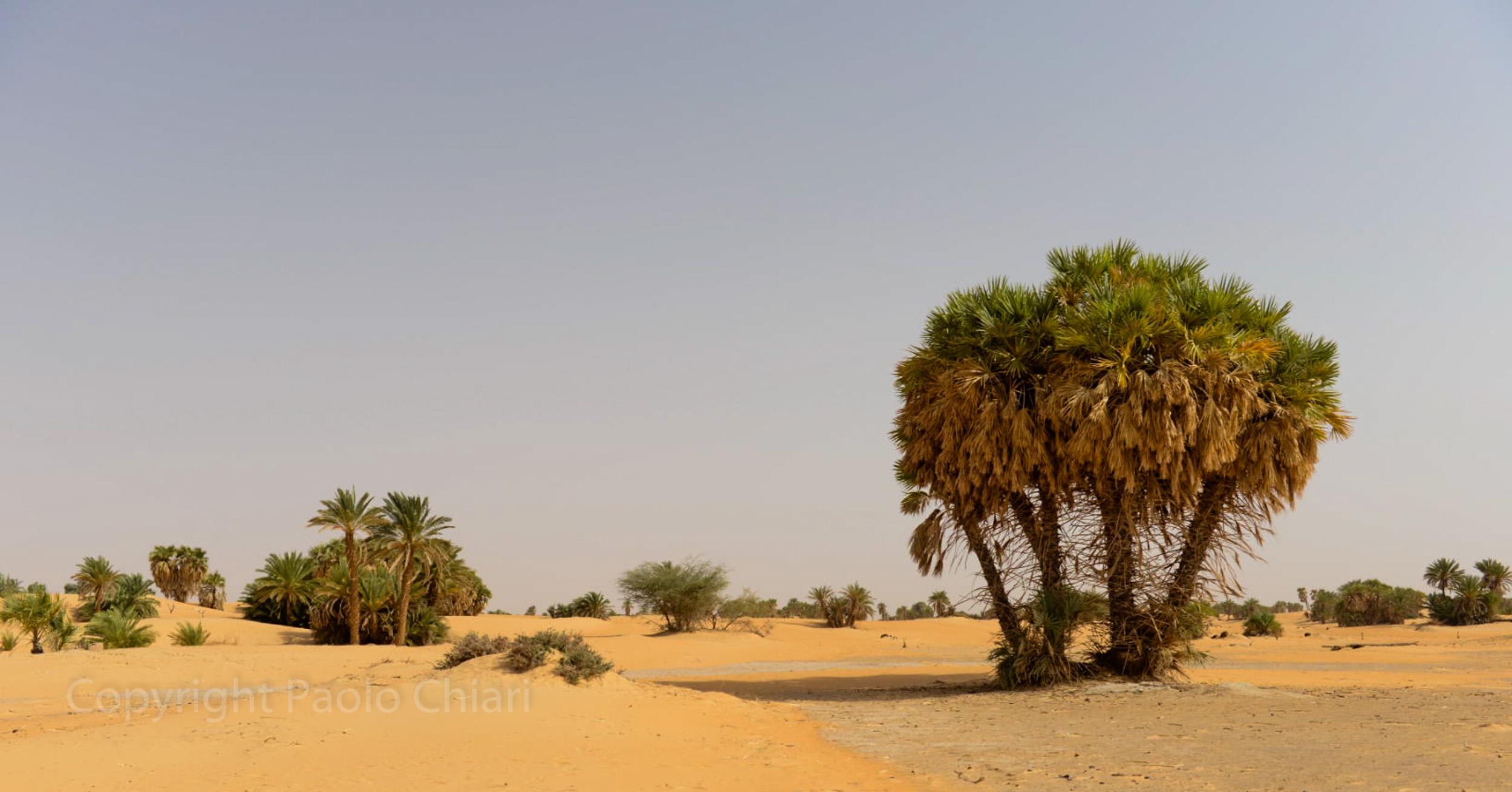 Sudan2013_1856