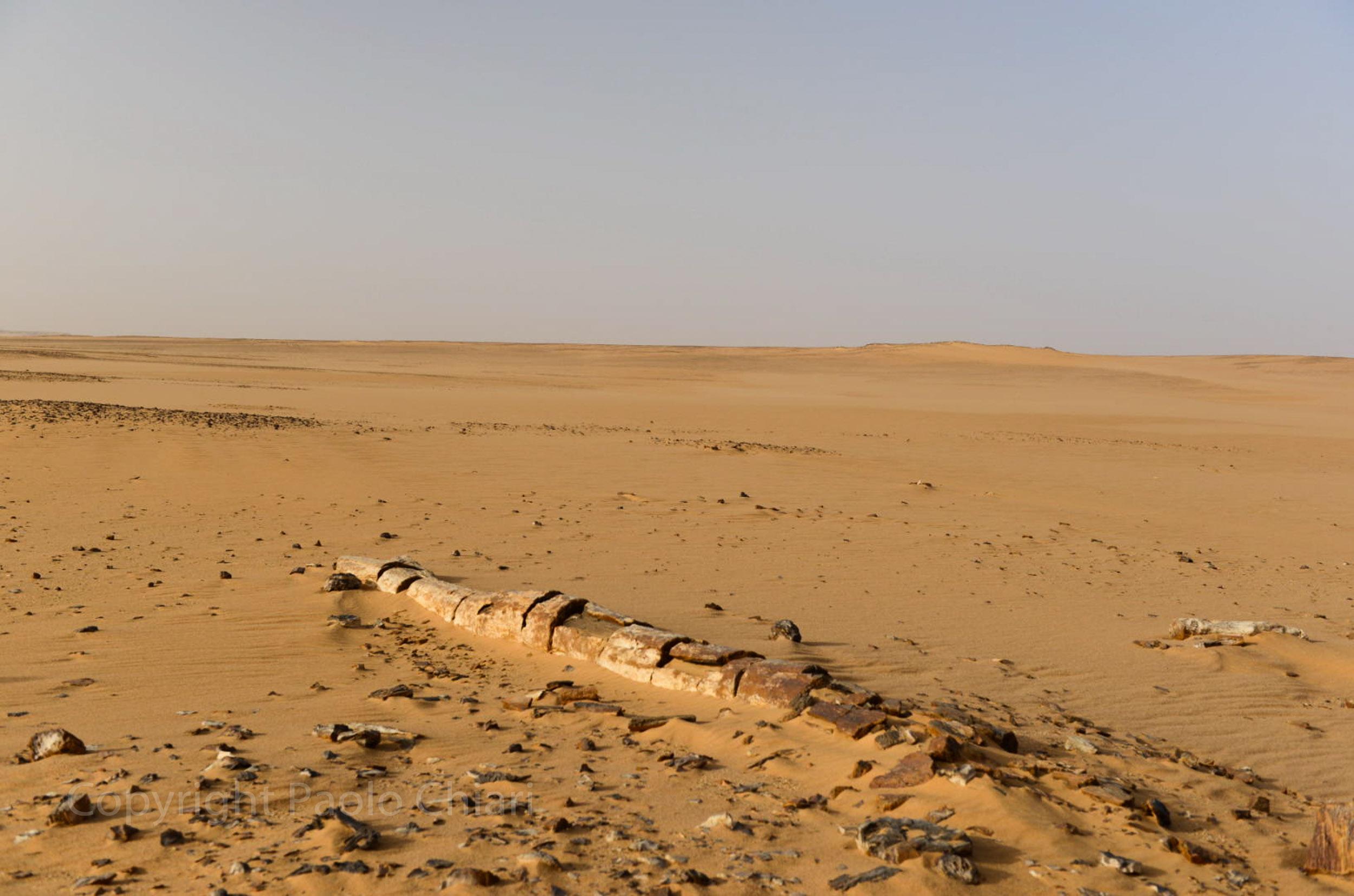 Sudan2013_1914