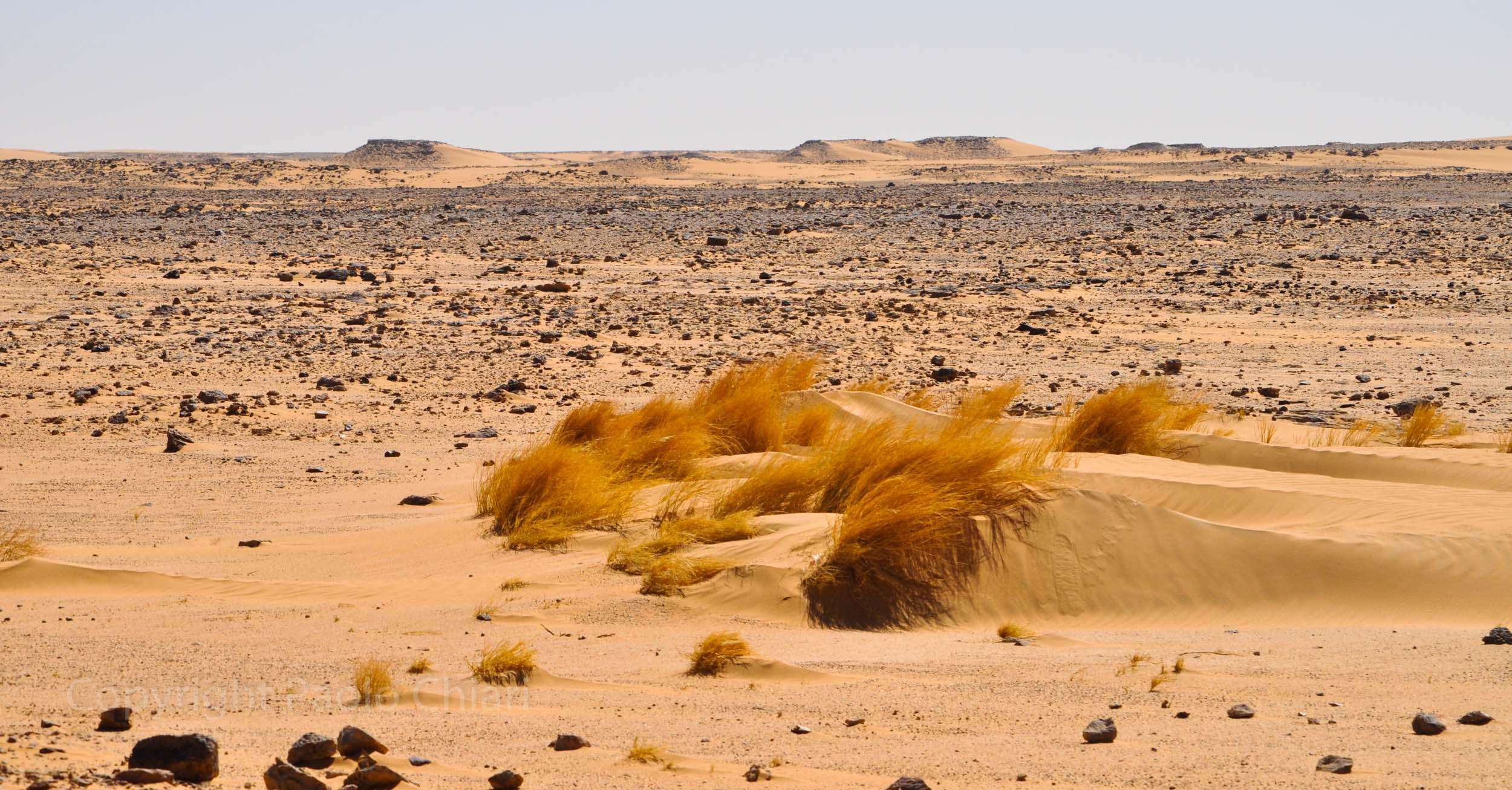Sudan2013_1976