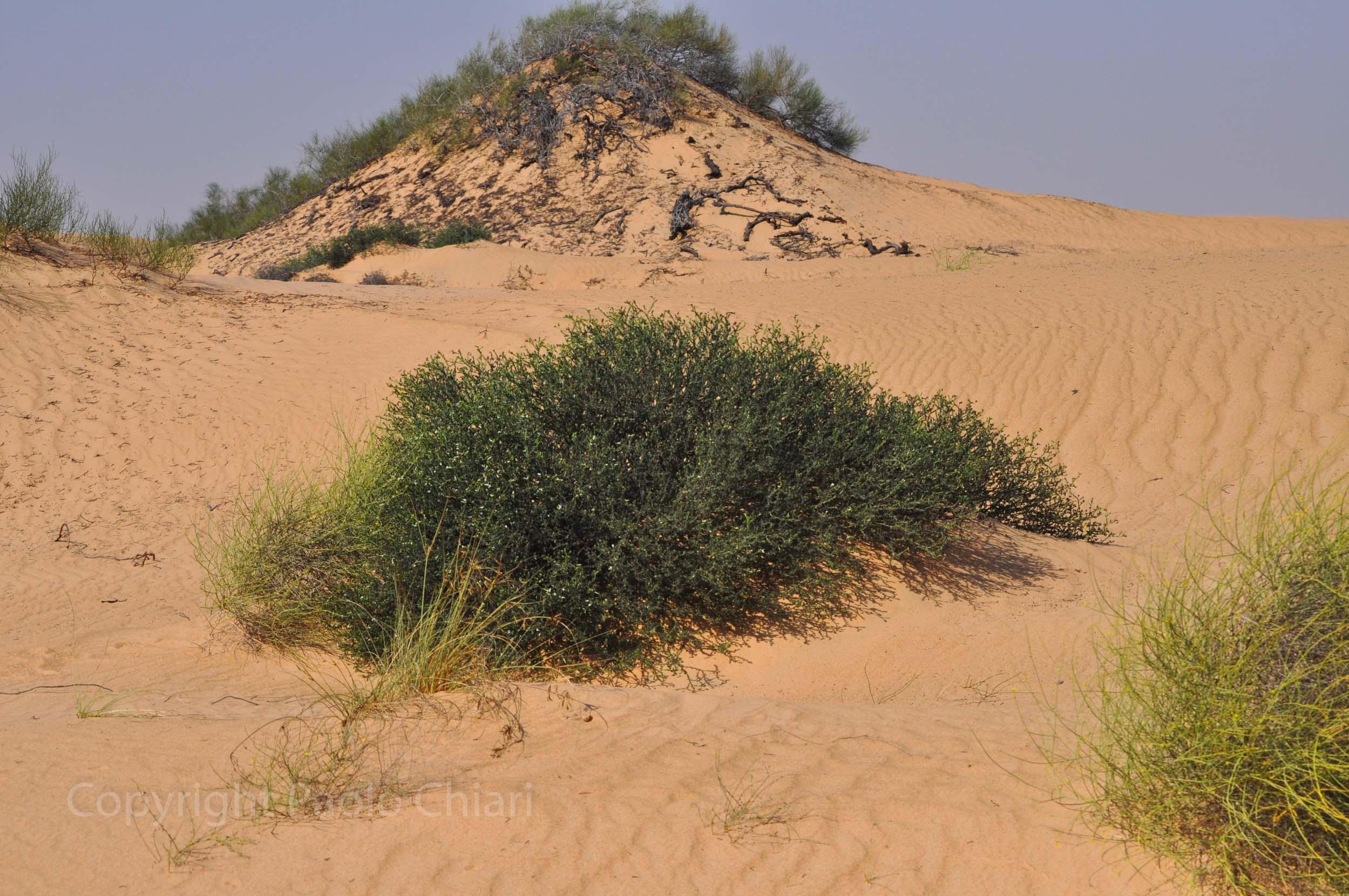 192_Oman13_0467
