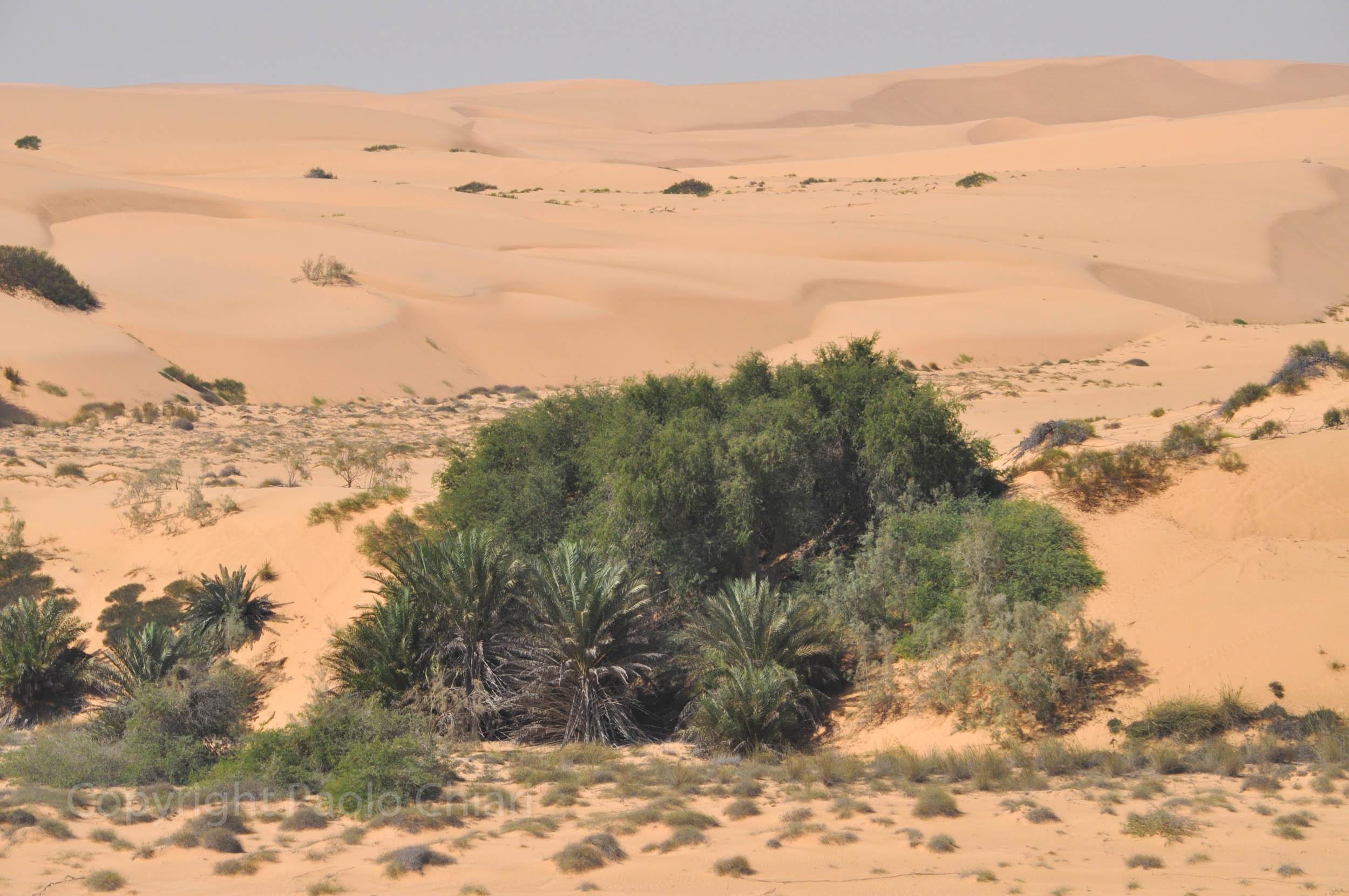 196_Oman13_0477