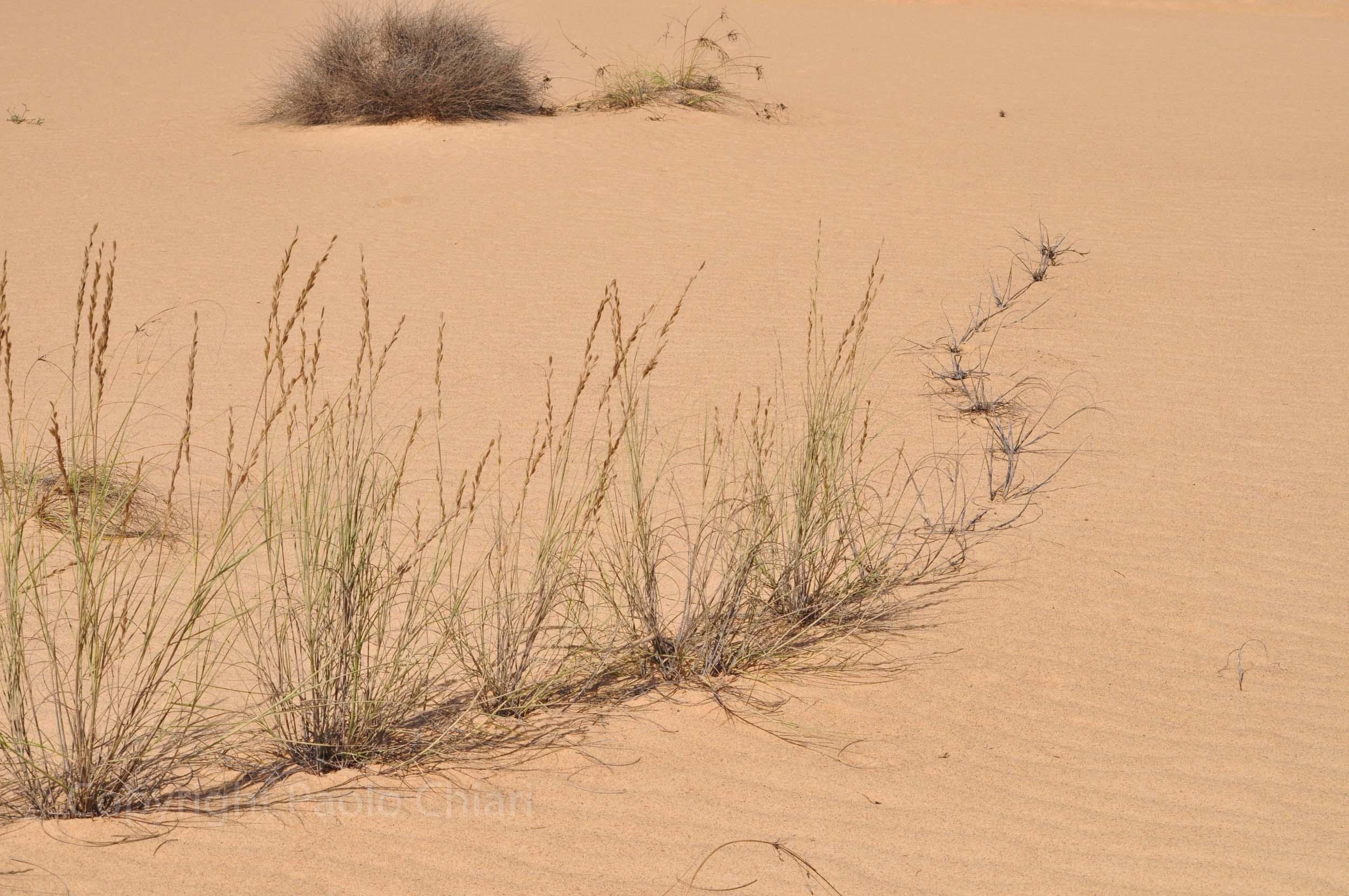 203_Oman13_0503