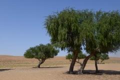 111_Oman13_0873
