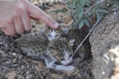 115_Oman13_0221
