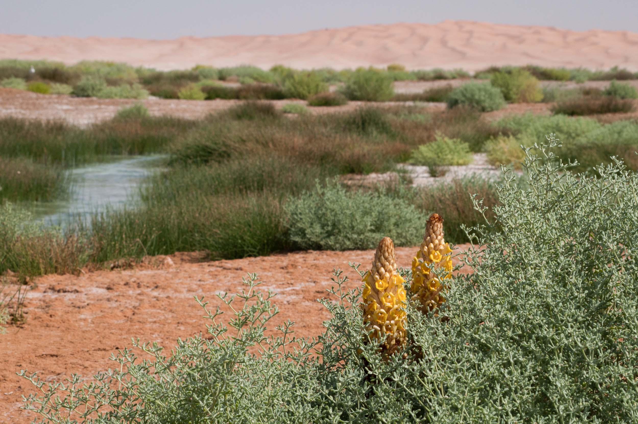 Oman14_1473