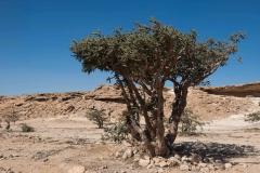 Oman14_2385