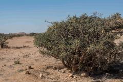 Oman14_2393