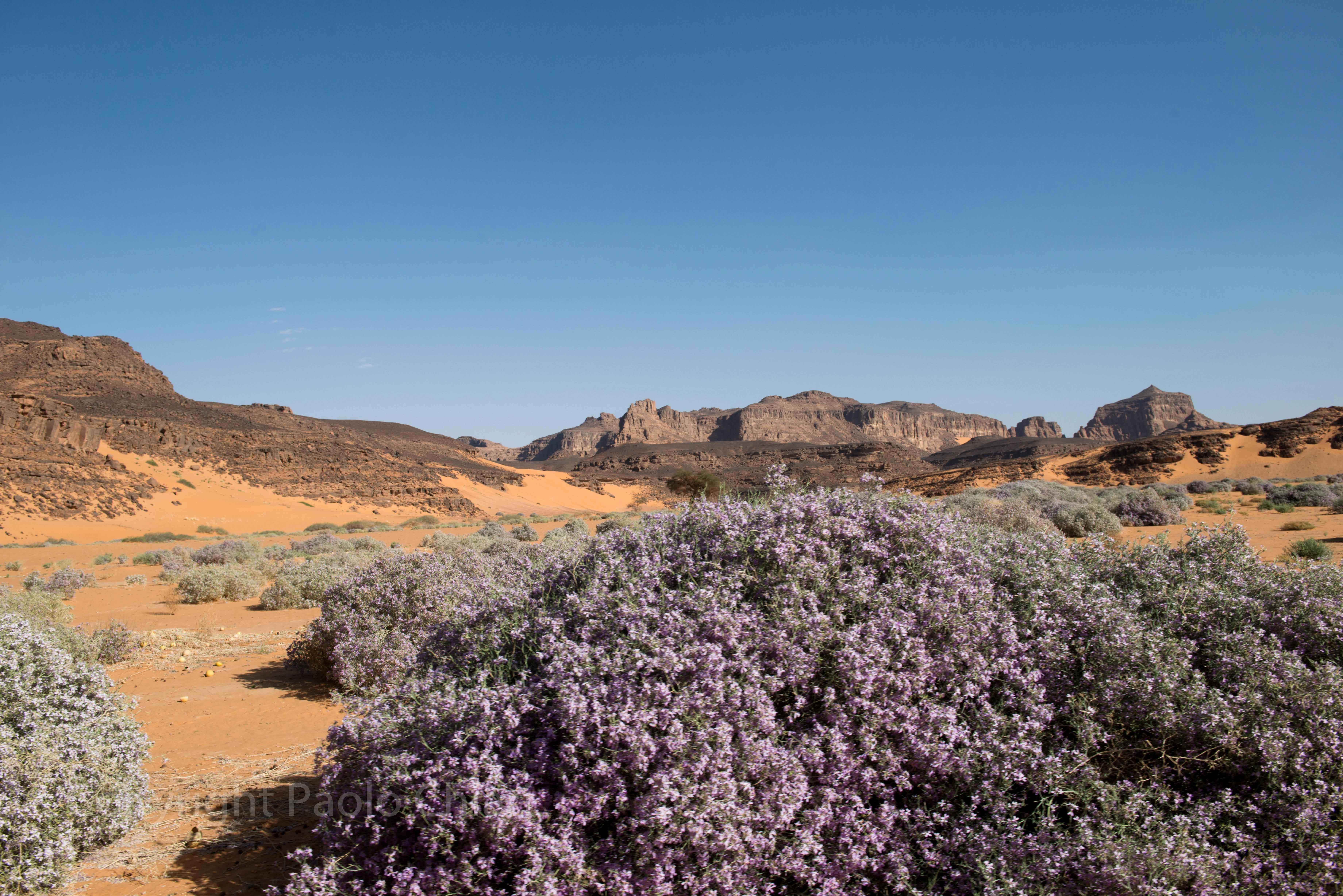 Deserto in fiore